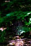 Web de aranha que incandesce na luz do sol no meio do mais forrest fotografia de stock royalty free
