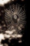 Web de aranhas Fotografia de Stock