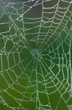 Web de aranhas Fotografia de Stock Royalty Free