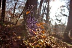 Web de aranhas Foto de Stock