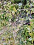 Web de aranhas Imagens de Stock