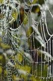 Web de aranhas, amanhecer. Imagens de Stock