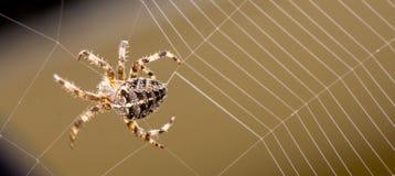 Web de bâtiment d'araignée Photos libres de droits