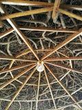 Web de bois Photo stock