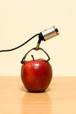 Web de chambre de pomme Photographie stock libre de droits