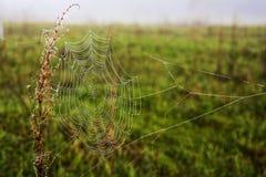 Web in de de zomerochtend Royalty-vrije Stock Foto
