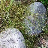 Web de flores blancas florecientes y de la hierba verde sobre piedras Imagen de archivo
