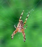 Web de l'araignée n images stock