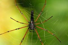 Web de la araña Foto de archivo libre de regalías