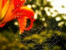 Web de la flor y de araña Foto de archivo libre de regalías