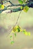 Web de la mañana Fotografía de archivo libre de regalías