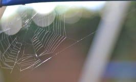 Web de la mazorca de las arañas Imágenes de archivo libres de regalías