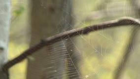 Web in de lentebos stock videobeelden