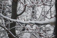 Web de neige photographie stock
