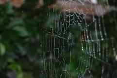 Web in de ochtenddauw Royalty-vrije Stock Foto