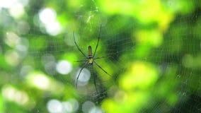 Web de ondulation d'araignée dans le sauvage banque de vidéos