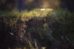 Web de Spyder à la lumière du soleil photo libre de droits