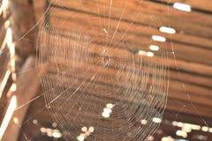 Web de una araña contra fondo de madera fotografía de archivo