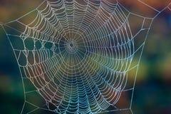 Web del ragno Fotografie Stock Libere da Diritti