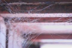 Web del ` s de la araña en la ventana Fotos de archivo libres de regalías