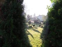 Web del ` s del ragno fotografia stock