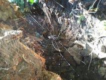 Web del ` s del ragno Fotografie Stock