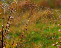 Web della foto con le gocce di rugiada sul prato Fotografia Stock