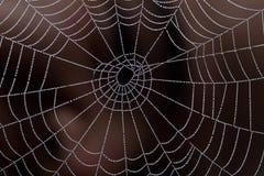 Web der Perlen Lizenzfreie Stockbilder