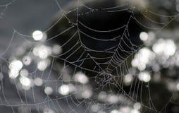 Web der Spinne Lizenzfreie Stockfotos
