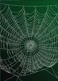 Web der Spinne Stockfotografie