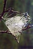 Web der Spinne Lizenzfreie Stockfotografie