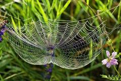 Web der Spinne und des Taus Stockbilder