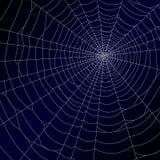 Web der Spinne. Vektor. Lizenzfreies Stockfoto