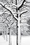 Web des arbres Photo stock