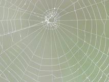 Web designer. Spiders  cobweb  design Royalty Free Stock Images