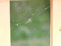 Web designer. Spiders  cobweb  design Royalty Free Stock Photo