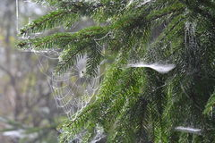 Web, detail Royalty Free Stock Photography