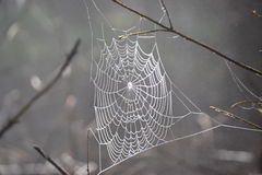 Web, detail Stock Images