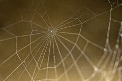 Web in detail. Spider web in detail. slovak nature Stock Photo