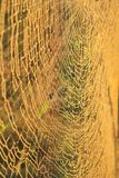 Web of Detailed Gold - Natural Architecture Background Royalty Free Stock Photography