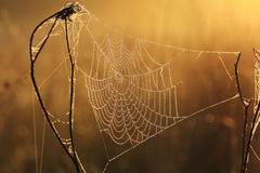 Web in dew Royalty Free Stock Photos