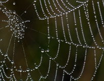 Web in dew Stock Image