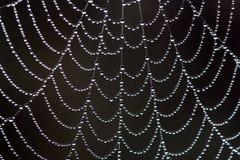 Web in dew Stock Photo