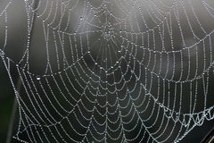 Web in dew Stock Photo