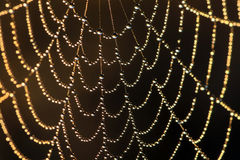 Web in dew royalty free stock images