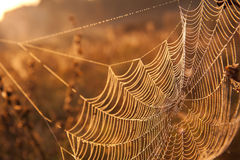 Web in dew Stock Images