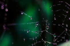 Web with dew drops stock photography