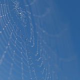 Web with dew drops Royalty Free Stock Photos