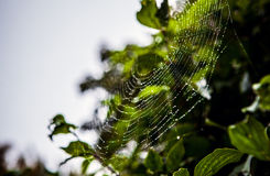 Web with dew drops in park. Stock Photo