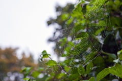 Web with dew drops in park. Stock Image